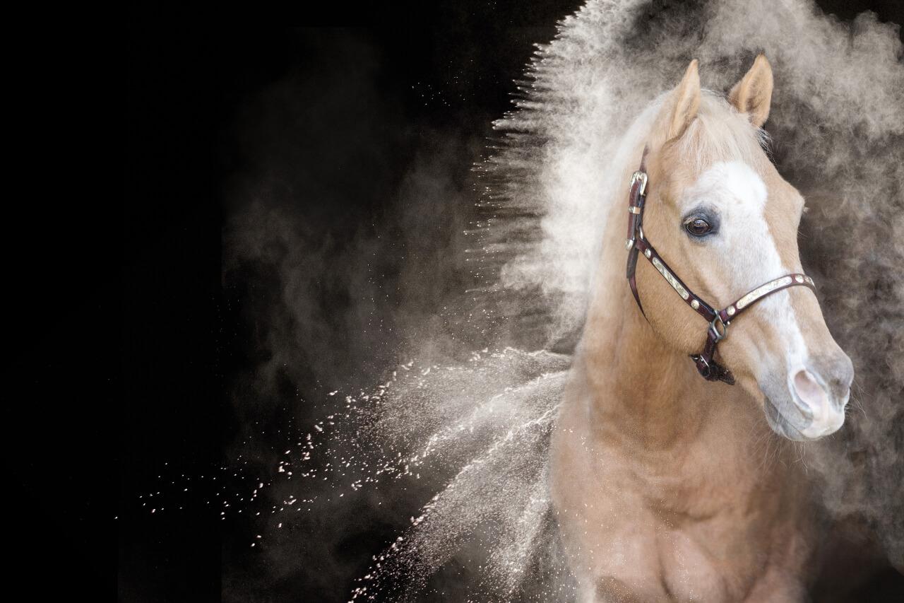 Womenpower Mit Pferden zu Deiner inneren Kraft